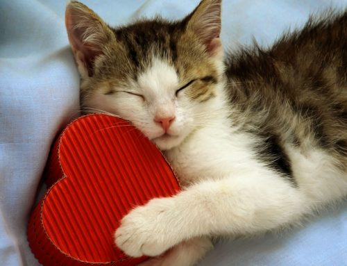 Taking Care of Your Pet's Heart
